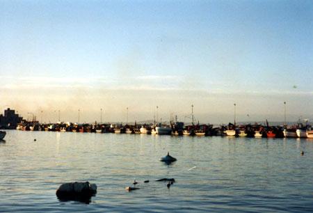 Port de pêche, chalutiers au repos pour cause de quotas européens, Ria de Arosa en Galice une sorte de douce Bretagne pour mon hivernage.